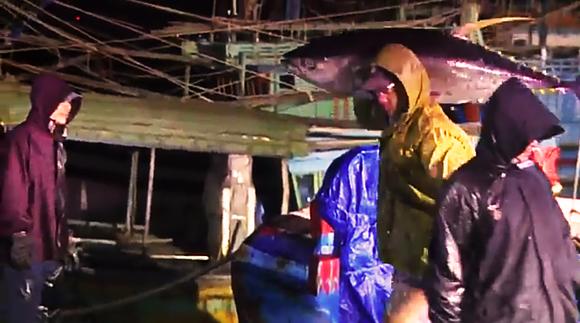 Ăn tết trên biển, một tàu cá Bình Định trúng mẻ cá bò gù 350 triệu ở đảo Hoàng Sa ảnh 5