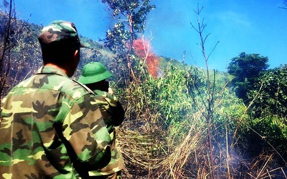 Trên 100 người cật lực dập lửa ở rừng Đèo Cả để bảo vệ rừng và nhà cửa ảnh 1