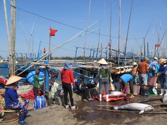 Hợp tác phát triển nghề cá khu vực ASEAN hiện đại, bền vững và có trách nhiệm ảnh 1