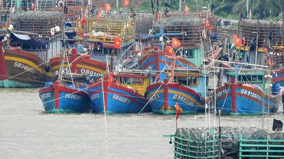 Tàu cá của ngư dân Quảng Bình neo đậu trên sông Nhật Lệ.