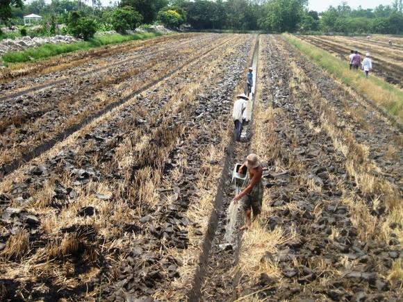 Chuyển đổi 126.333ha đất lúa kém hiệu quả trong năm 2019 ảnh 4