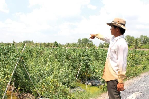 VWS: Những hoạt động vì môi trường và hỗ trợ vốn cho nông dân nghèo ảnh 5
