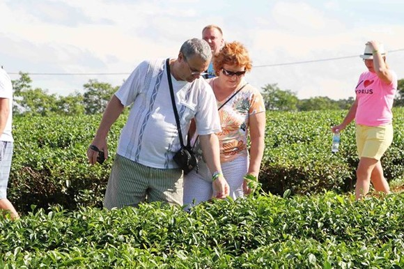 Foreign tourists visit a tea farm in Bao Loc. (Photo: Sggp)
