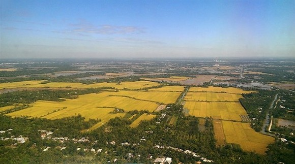 Rice fields in Thot Not district in the Mekong Delta province of Can Tho (Photo: VNA)