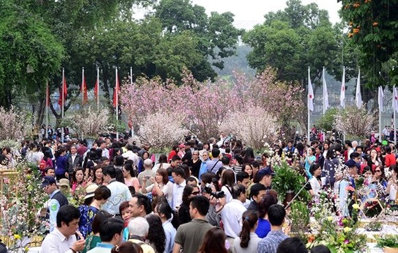 Japanese cherry blossom to bloom in Hanoi