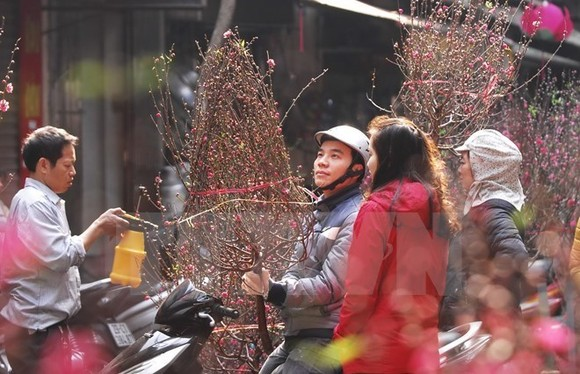 A man holds up a branch of peach blossom, which is a key feature of Vietnam's Lunar New Year traditions (Photo: VNA)