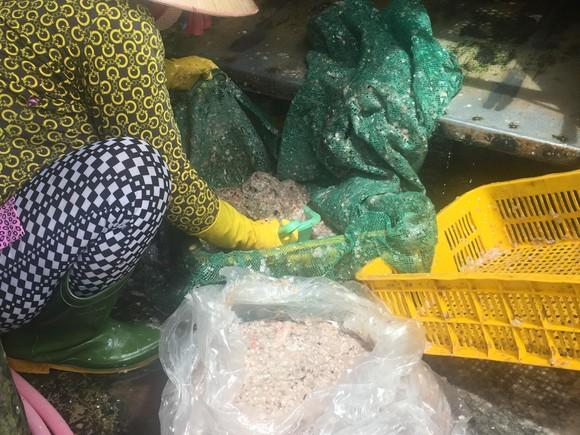 Chưa rõ mục đích thương lái ồ ạt mua vảy cá tại Đồng Tháp ảnh 1