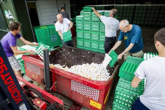 Nông dân đổ bỏ trứng tại trại gia cầm ở Onstwedde, Hà Lan, sau khi cơ quan y tế xác định trứng nhiễm thuốc trừ sâu Fipronil. Ảnh: ANP