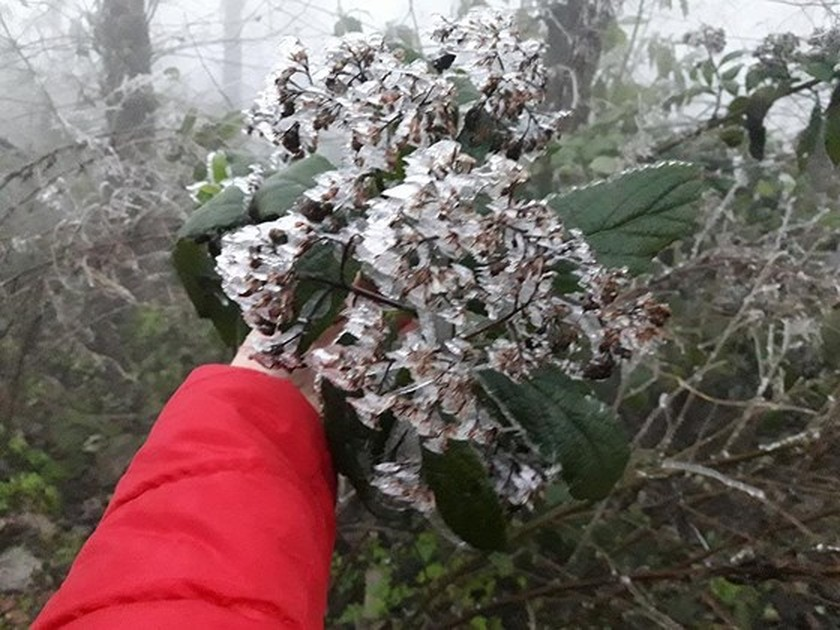 Frost covers montane forests in north ảnh 1