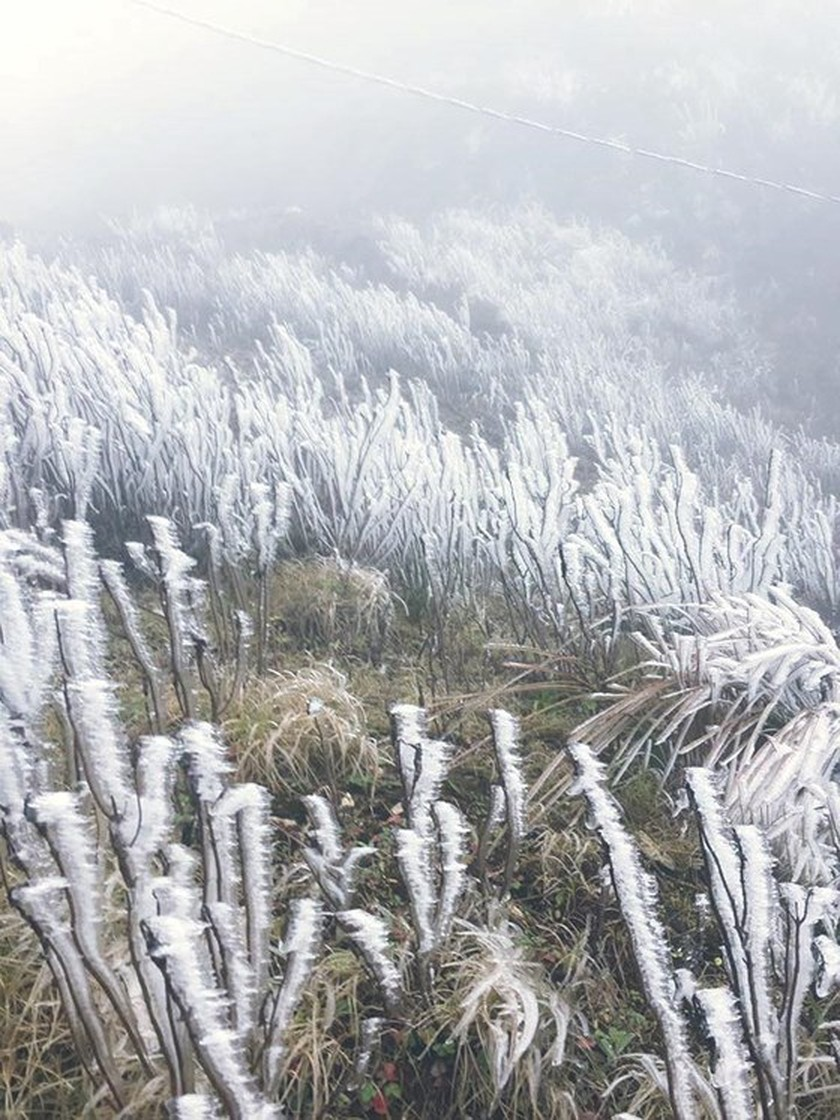 Frost covers montane forests in north ảnh 2