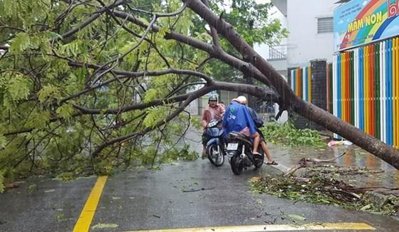 Khanh Hoa prepares for storm No.14 ảnh 2