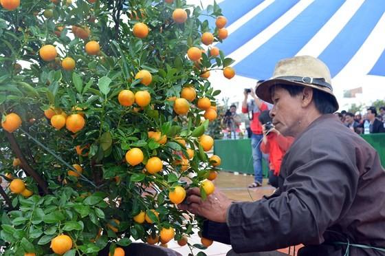 Bonsai Kumquat -Hoian 2018 launched ảnh 2