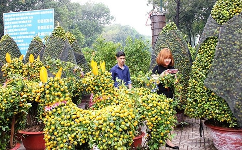 HCMC people prepare bonsai flowers for Tet ảnh 4