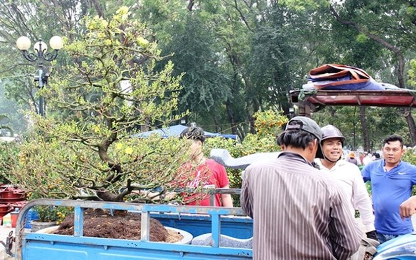 HCMC people prepare bonsai flowers for Tet ảnh 1
