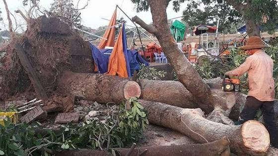 Whirlwind hits Dak Lak province, one dead ảnh 1