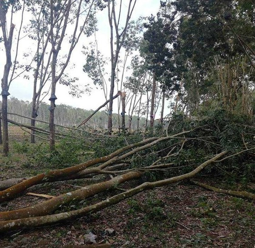 Hailstorm & whirlwind damage dozens of houses in Kontum ảnh 1