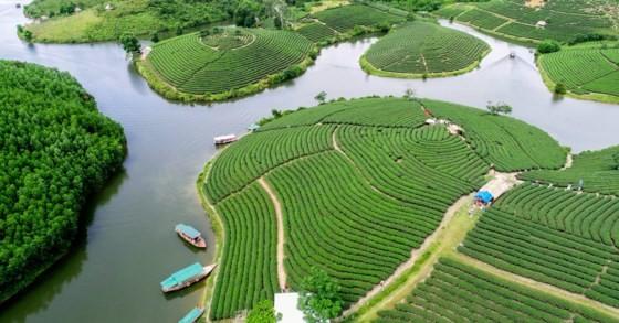 Ngỡ ngàng ốc đảo chè đầu tiên của Việt Nam ảnh 1