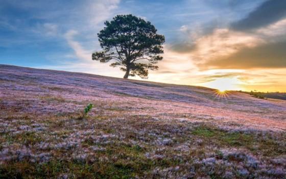 Đà Lạt - Thảo nguyên cỏ hồng ảnh 7
