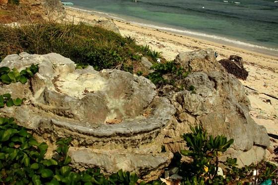 Vẻ đẹp san hô hóa thạch hoa hồng ngàn năm đảo Lý Sơn ảnh 2