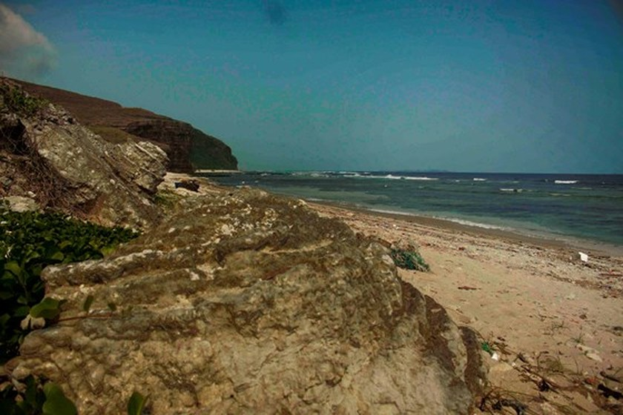 Vẻ đẹp san hô hóa thạch hoa hồng ngàn năm đảo Lý Sơn ảnh 4
