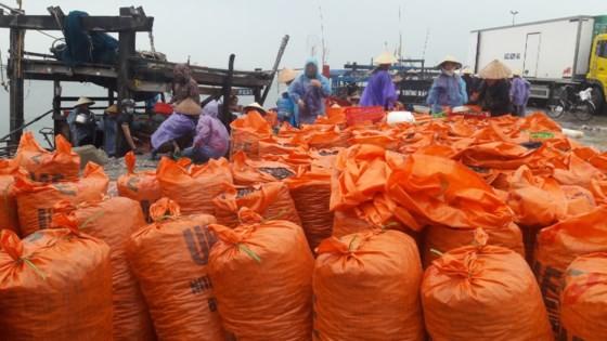 Fishermen harvest huge number of clams  ảnh 1