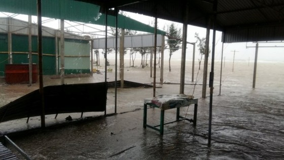 Typhoon Doksuri makes landfall in central provinces  ảnh 11