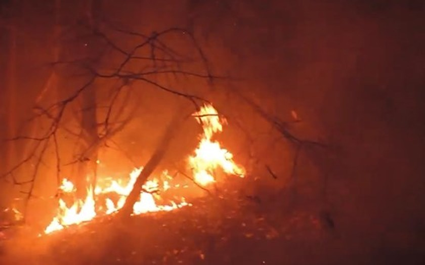 Flame destroys over 30 hectares of forest in Ta Cu Mountain Nature Reserve  ảnh 1