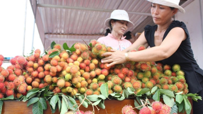 Rambutan, coconut prices increase to record high in Mekong Delta ảnh 1