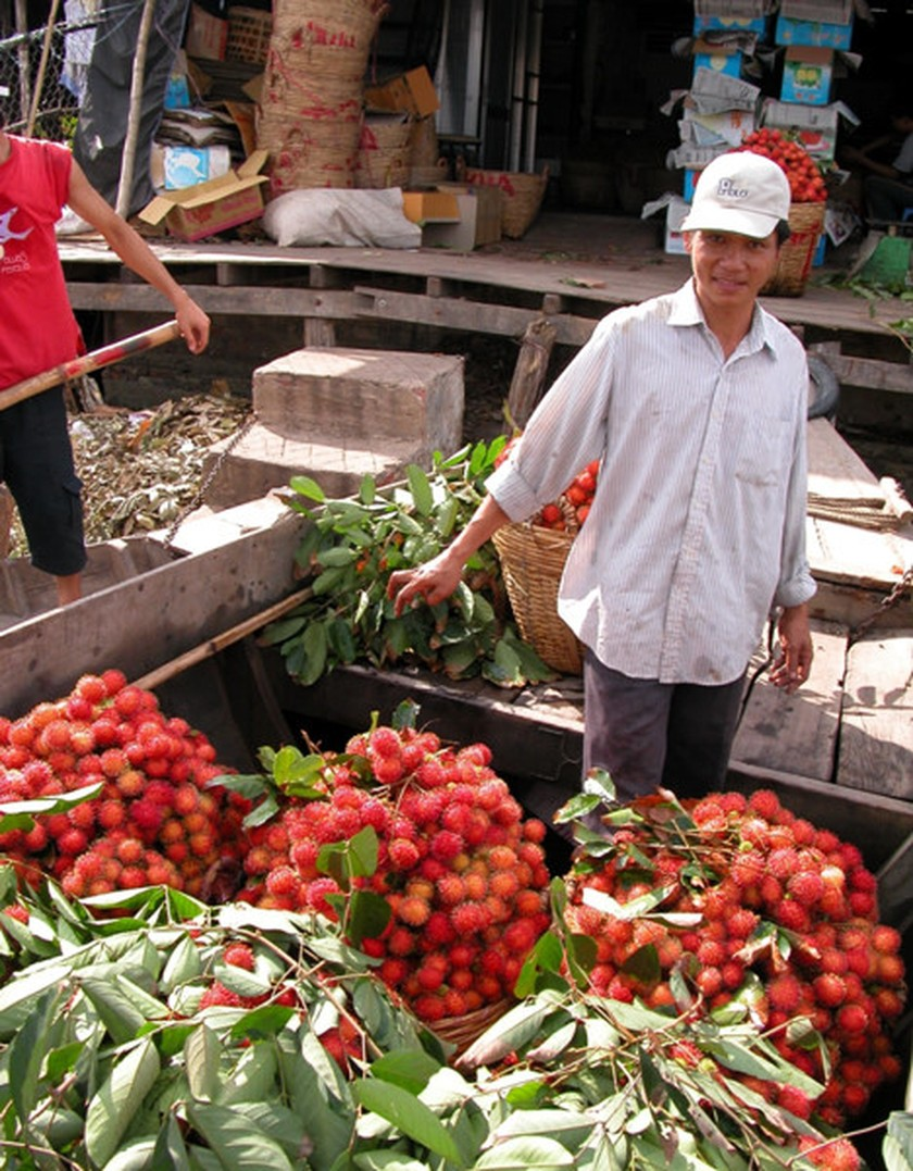 Rambutan, coconut prices increase to record high in Mekong Delta ảnh 2