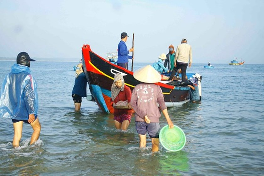 Quang Ngai fishermen enjoys bumper tiny shrimp catch yearend ảnh 3