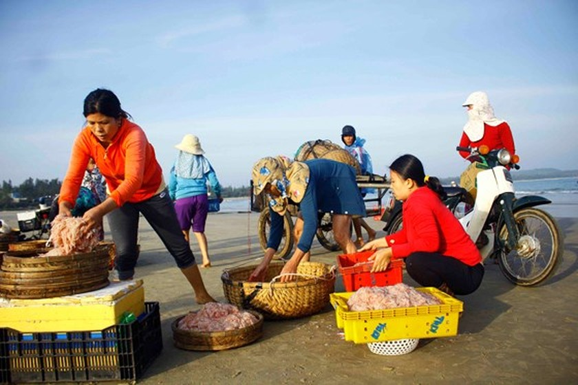 Quang Ngai fishermen enjoys bumper tiny shrimp catch yearend ảnh 7