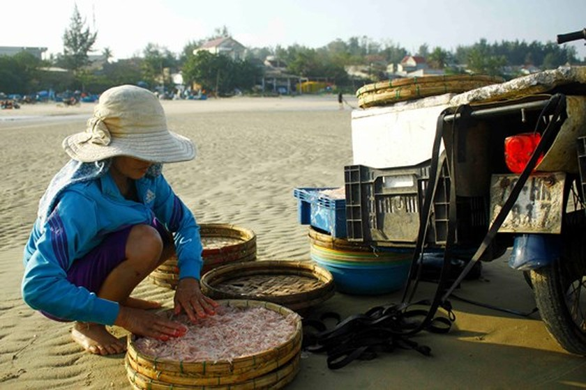 Quang Ngai fishermen enjoys bumper tiny shrimp catch yearend ảnh 8