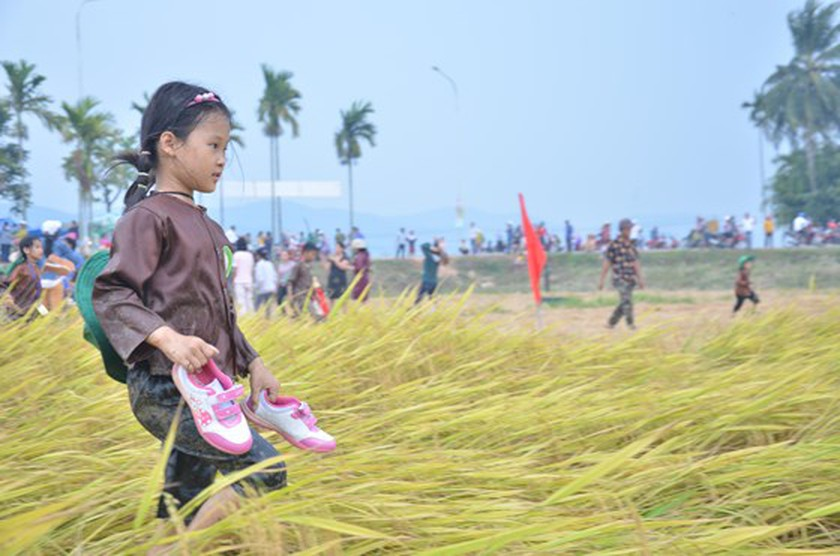 Hundreds of little farmers harvest rice in Quang Ngai province ảnh 13