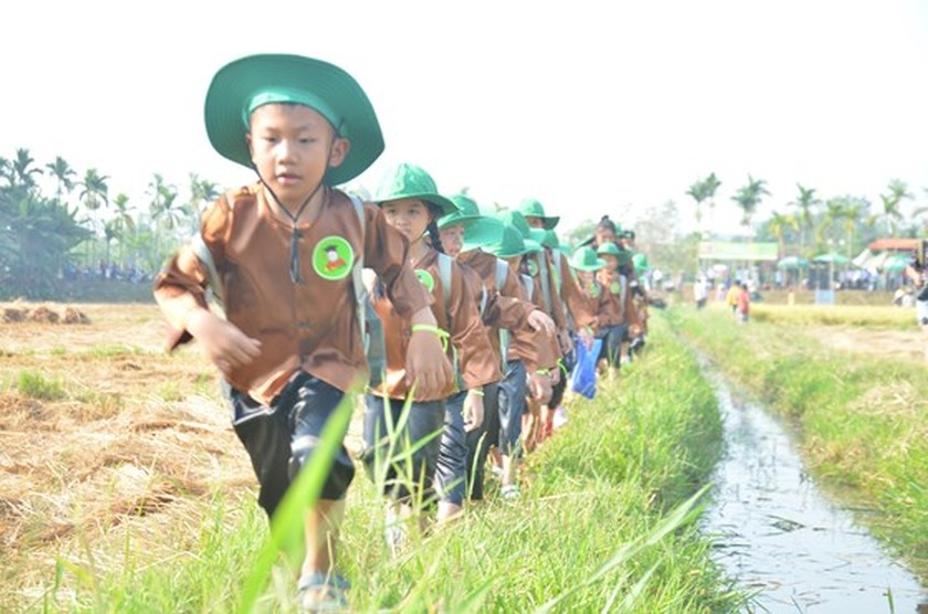 Hundreds of little farmers harvest rice in Quang Ngai province ảnh 2
