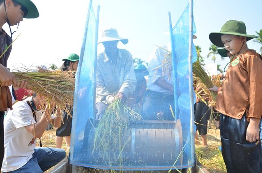 Hundreds of little farmers harvest rice in Quang Ngai province ảnh 3
