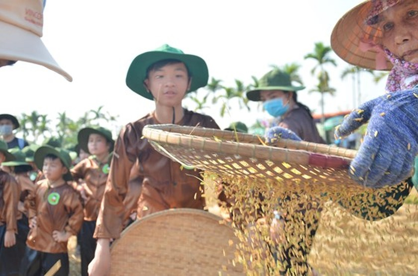 Hundreds of little farmers harvest rice in Quang Ngai province ảnh 4