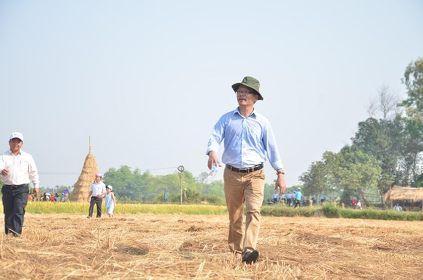 Hundreds of little farmers harvest rice in Quang Ngai province ảnh 5