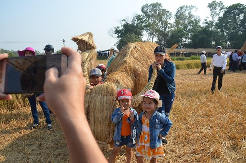 Hundreds of little farmers harvest rice in Quang Ngai province ảnh 6