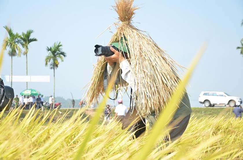 Hundreds of little farmers harvest rice in Quang Ngai province ảnh 7