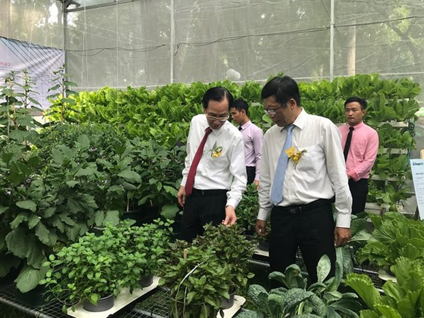 First Orchid Festival opens in HCMC ảnh 3