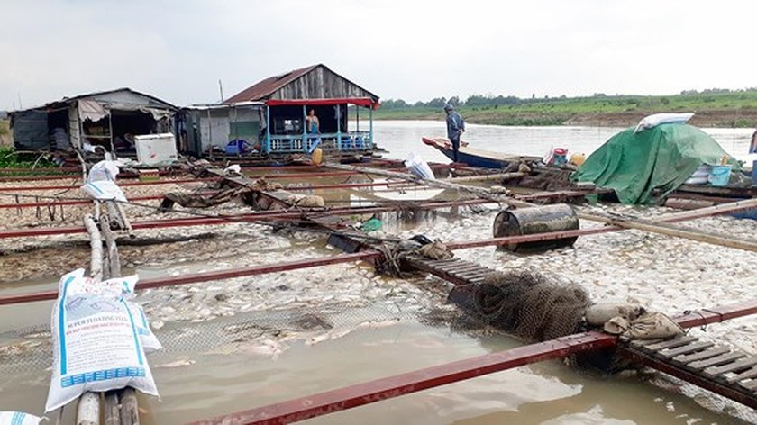 Farmers stricken with fish die-off in La Nga river ảnh 1