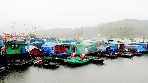 Typhoon Wipha makes landfall in Quang Ninh, drenching Northern Vietnam with rains ảnh 2
