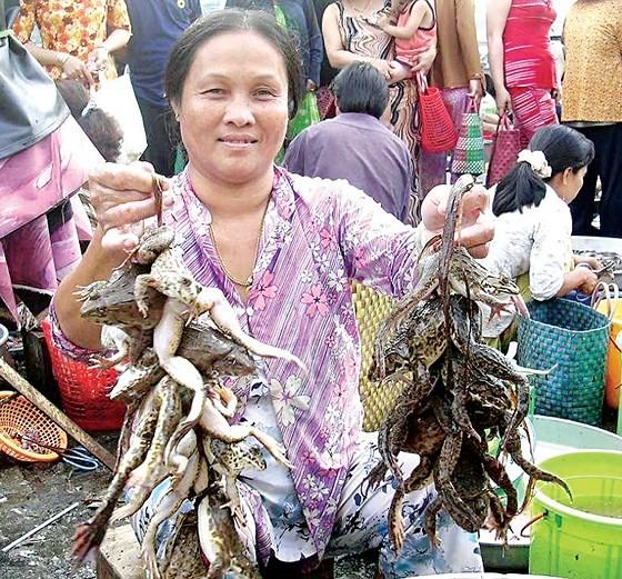 Mekong farmers earn money on early flooding season ảnh 5