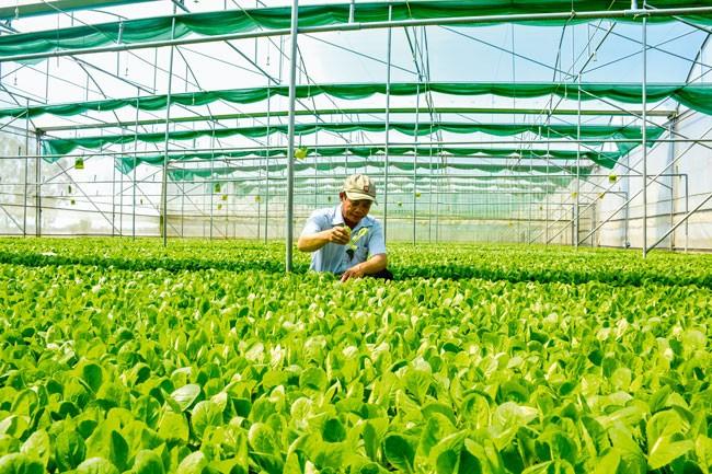 Nông nghiệp  thích ứng  4.0 ảnh 2