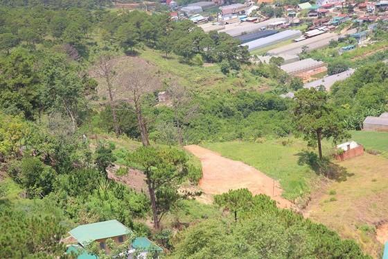 Hàng loạt cây thông ở Đà Lạt bị 'bức tử' trong khu dân cư ảnh 12