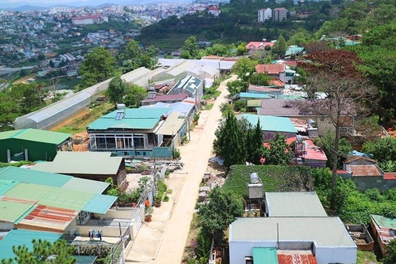 Hàng loạt cây thông ở Đà Lạt bị 'bức tử' trong khu dân cư ảnh 3