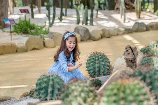 """Khám phá khu vườn """"kỳ hoa dị thảo"""" trên đảo kỷ lục Nha Trang ảnh 5"""
