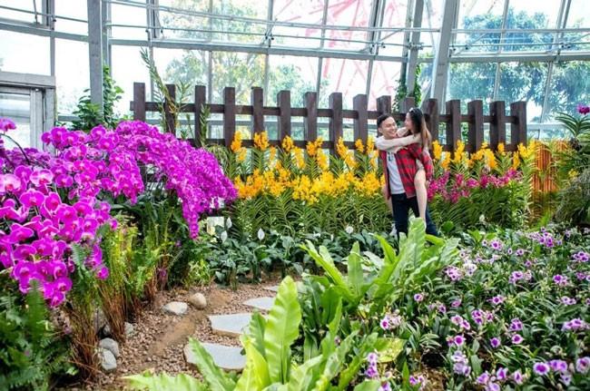 """Khám phá khu vườn """"kỳ hoa dị thảo"""" trên đảo kỷ lục Nha Trang ảnh 9"""