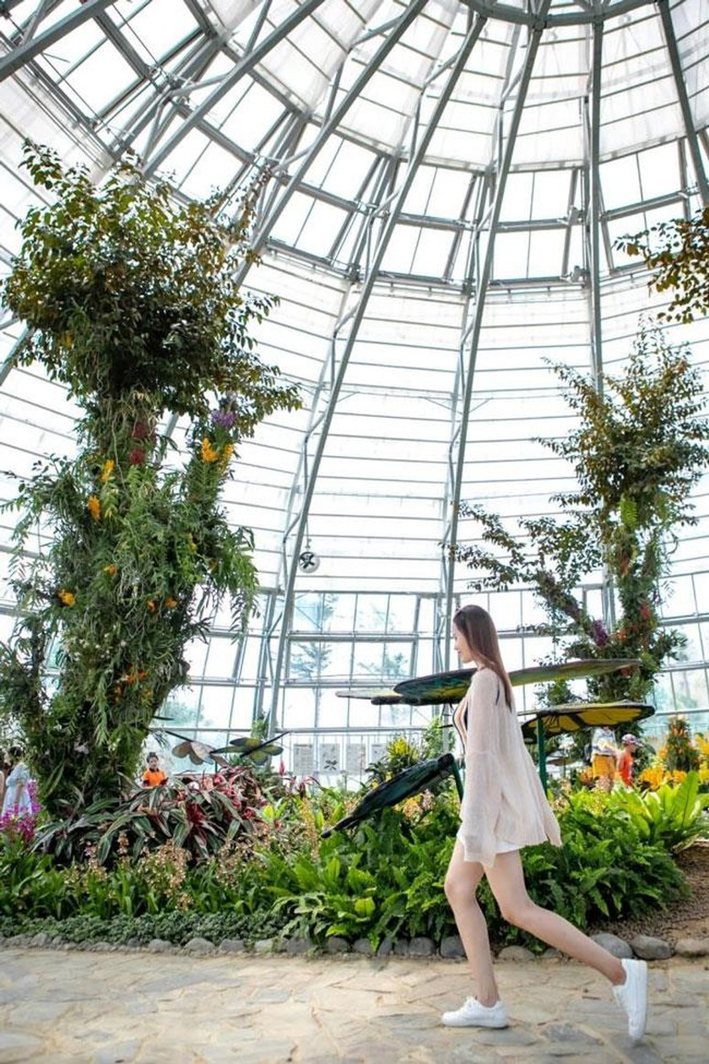 """Khám phá khu vườn """"kỳ hoa dị thảo"""" trên đảo kỷ lục Nha Trang ảnh 10"""