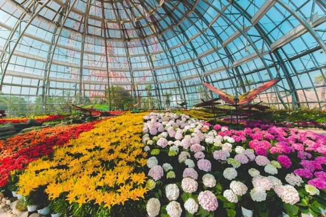 """Khám phá khu vườn """"kỳ hoa dị thảo"""" trên đảo kỷ lục Nha Trang ảnh 3"""